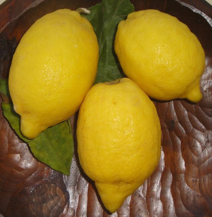 Typische Limoni aus der Halbinsel von Sorrento, bei Neapel
