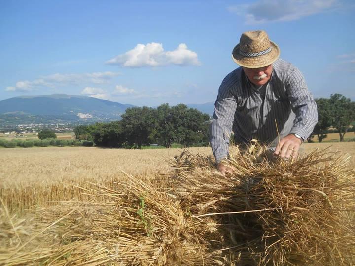 Umbrien Ein Bauer bei der Ernte