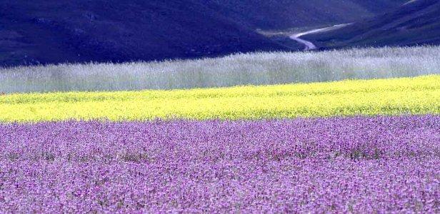 Blüten in Castelluccio, Umbrien