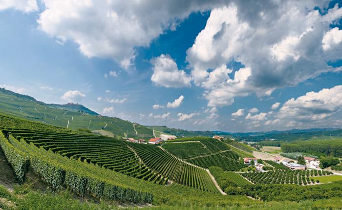 Weinberge in der Region Langhe