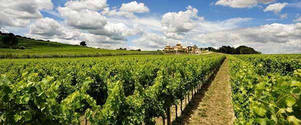 viticoltura-a-montefalco