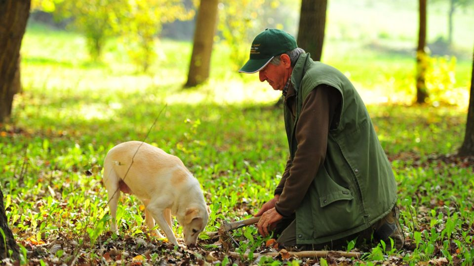 Ein Trüffelsucher mit seinem treuen Hund