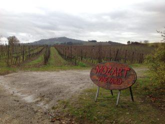 Montalcino Wein reift mit Mozart