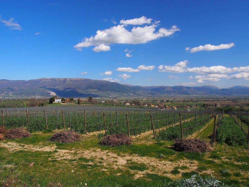 Typisches Landschaftsbild in Umbrien