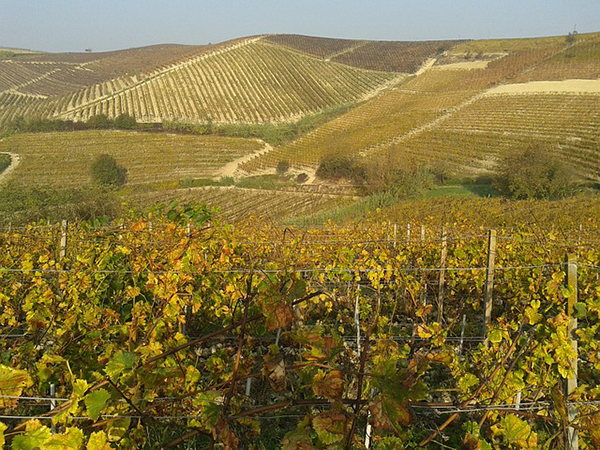 vineyards-667596_640