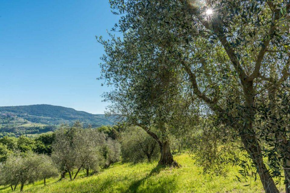 Geführte Wanderreisen in die südliche Toskana durch Olivenhaine und Weinberge