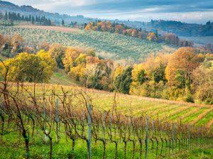 Wandern durch die Weinberge. Herbststimmung in der südlichen Toskana