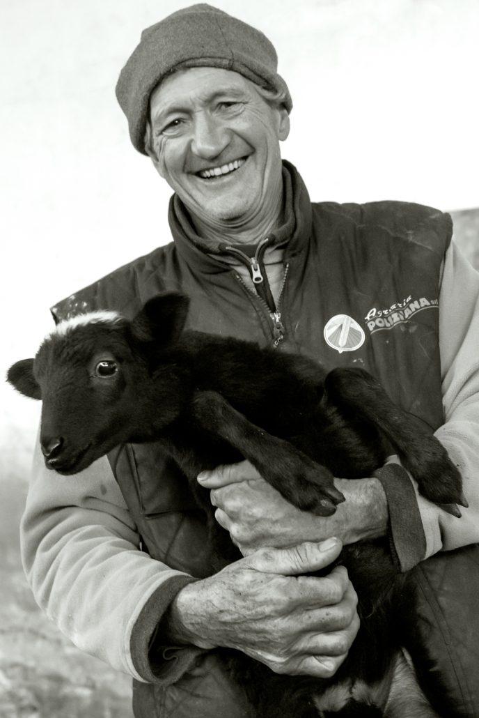 Im Landgut Vergelle wird Schafskaese, Pecorino, hergestellt