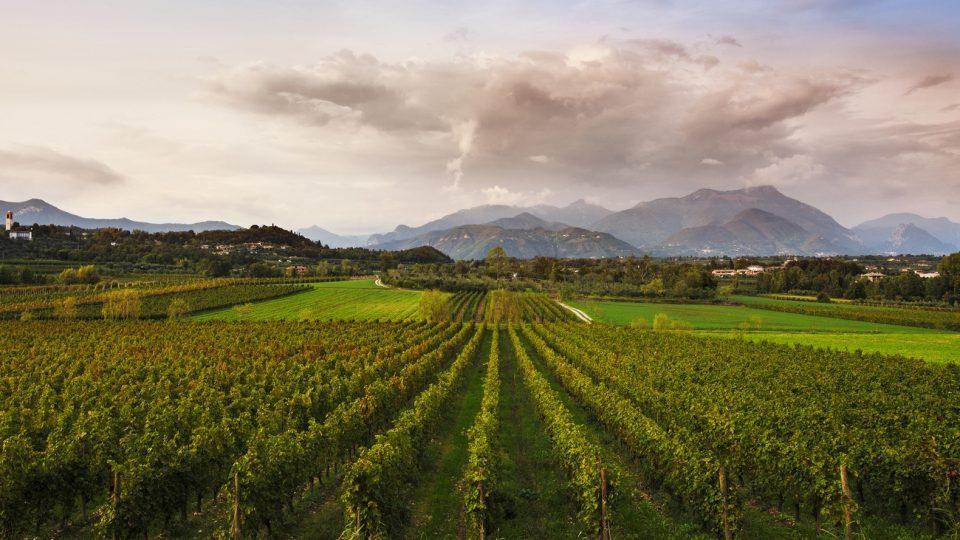 Weinanbau in der Lombardei