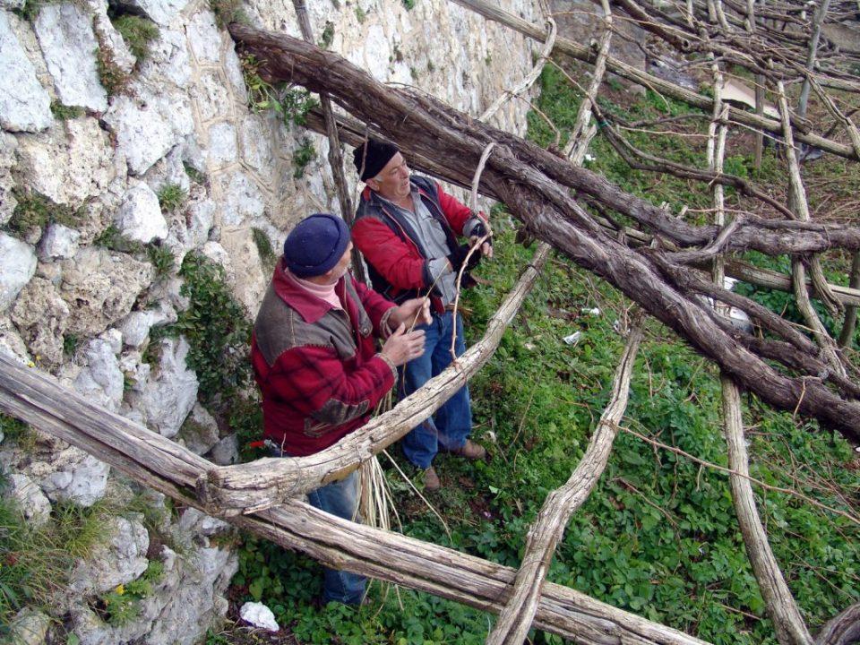 Weinbauern bei der Arbeit