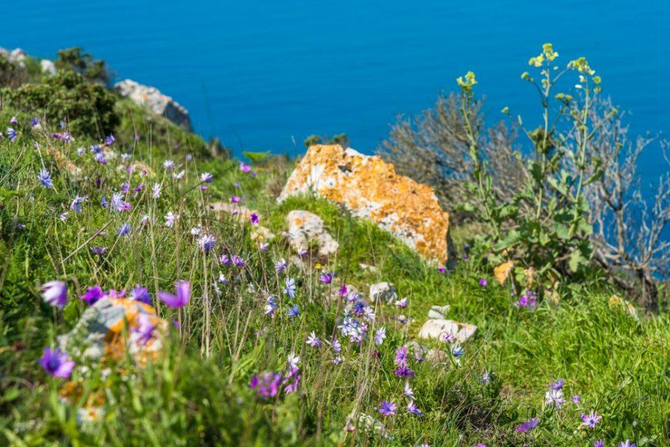 Blütenmeer auf dem Wanderweg