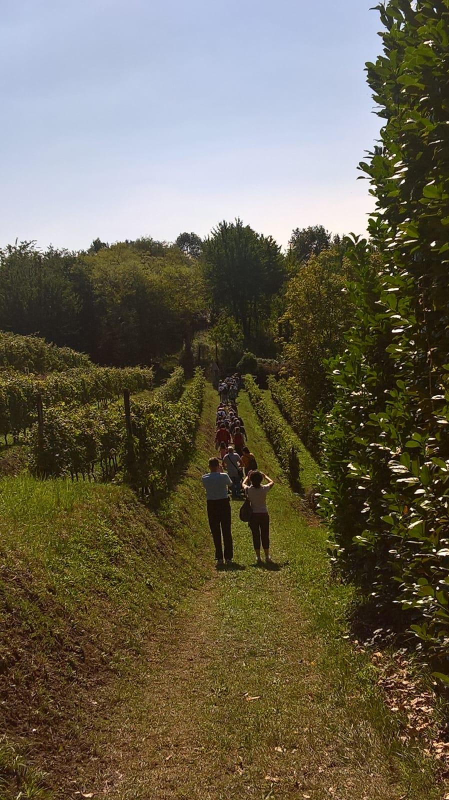 Spaziergang in den Weinbergen