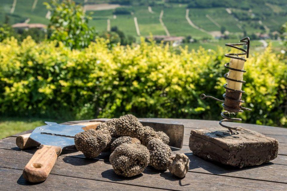 Trüffelsuche im Piemont mit Trüffelhund und Trifulau