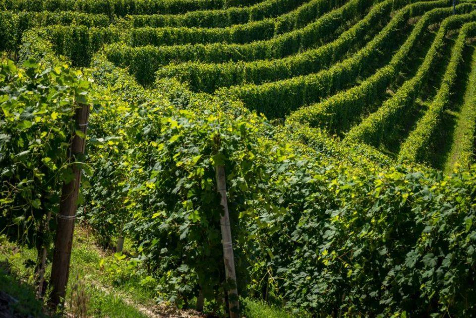 Weinreisen mit Weinverkostungen im Piemont in die Gegend der Langhe