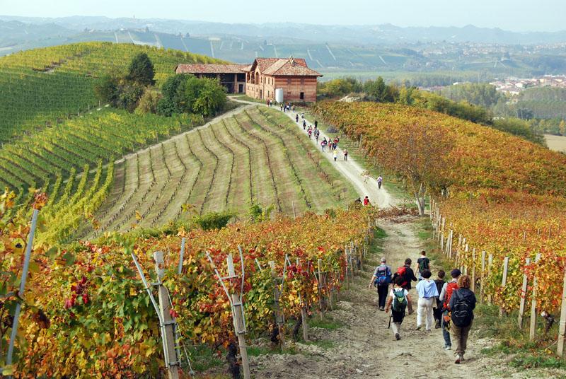 Wandern im Piemont durch die Landschaft der Langhe