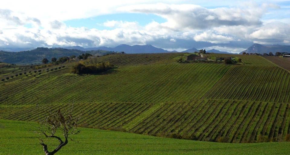Die Weinberge von Pievalta